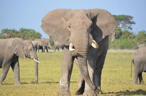 elephant_mom_mara_kwca